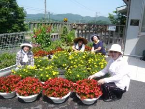 麦の丘 花のボランティア